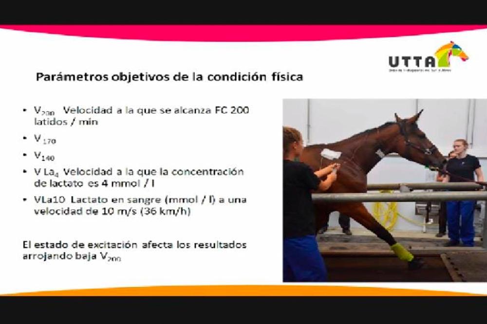 Un viaje por la ciencia del caballo deportivo